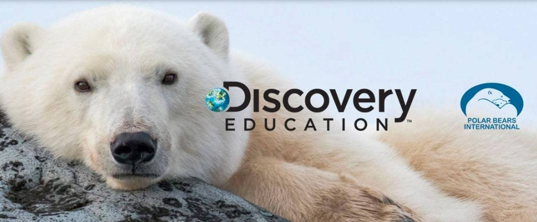 Discovery-Education-Polar-Bears-International