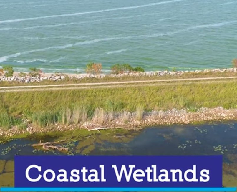 Great-Lakes-Coastal-Wetlands