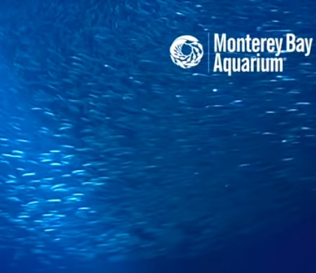 Monterey-Bay-Aquarium-The-Open-Sea-Cam