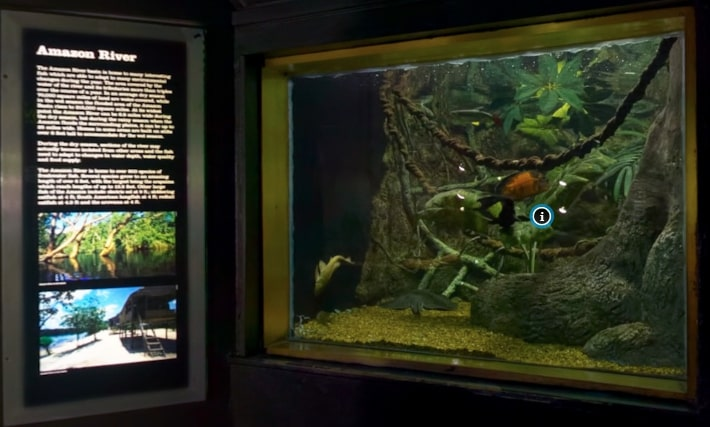 National-Aquarium-Amazon-River-virtual-Tour