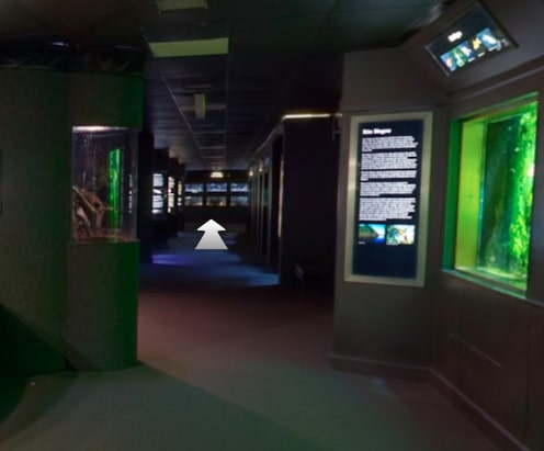 National-Aquarium-Virtual-Tour