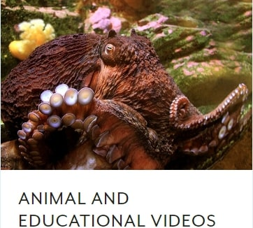 Seattle-Aquarium-Animal-and-Educational-Videos