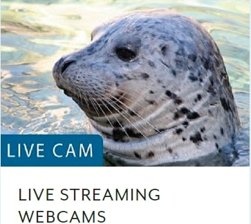 Seattle-Aquarium-Live-Webcams