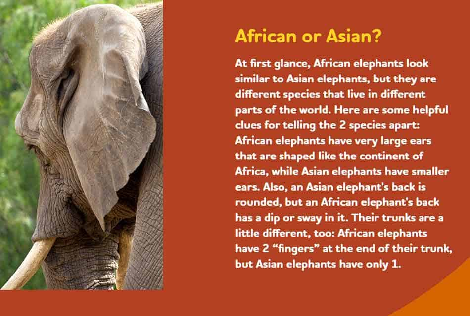 details of elephants in the zoo